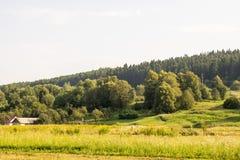 在森林的边缘的生活 免版税图库摄影