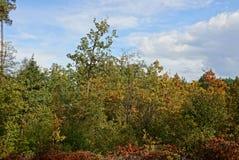在森林的边缘的秋天明亮的色的风景 库存图片