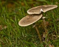 在森林的边缘的蘑菇 免版税库存照片