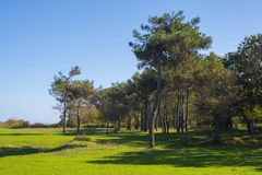 在森林的郊区的杉木 免版税库存照片