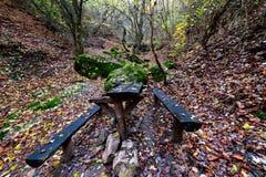 在森林的长凳在秋天 免版税图库摄影