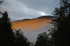 在森林的阳光在雾上 库存照片