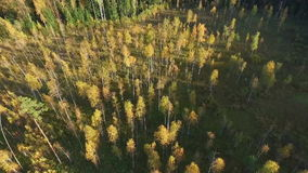 在森林的飞行 影视素材