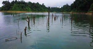 在森林的鸟瞰图皇家贝卢姆的霹雳州马来西亚 股票录像
