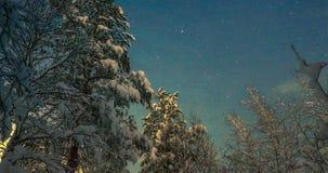 在森林的满天星斗的天空 库存图片