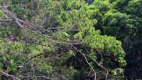 在森林的绿色树 股票录像