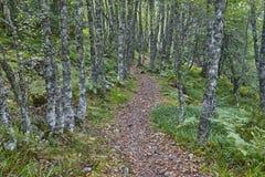 在森林秋天的路在Muniellos生物圈储备 航天学 库存图片
