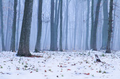 在森林第一雪落 库存照片