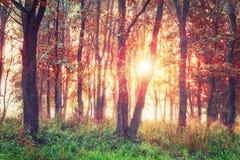 在森林红色叶子的五颜六色的秋天日出在树 秋天背景特写镜头上色常春藤叶子橙红 早晨在秋天森林里 库存图片