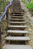在森林线索的木台阶 库存照片