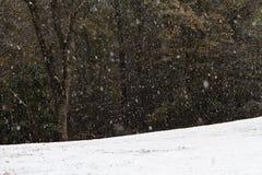 在森林结算的大雪秋天 免版税图库摄影