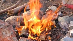 在森林美丽的火焰的火 影视素材