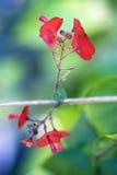 在森林背景的一点红色花 库存照片