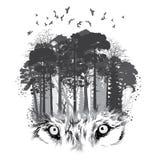 在森林背景的狼剪影 免版税库存图片
