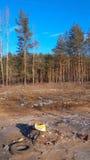 在森林背景的转储 库存照片