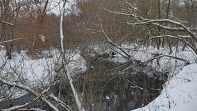 在森林自然冬天流动的水的小河,使雪的小河环境美化 影视素材