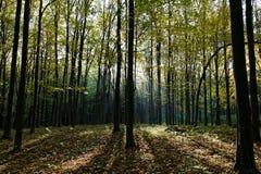 在森林自然绿色木头的早晨在阳光背景中 免版税库存图片