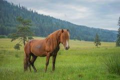 在森林草甸的幼小马 免版税库存图片