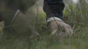 在森林草的蘑菇 股票录像