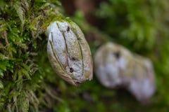 在森林被安置的o采蘑菇木头和平与青苔的 免版税图库摄影