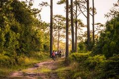 在森林足迹的男人、妇女和儿童实践的登山车 图库摄影