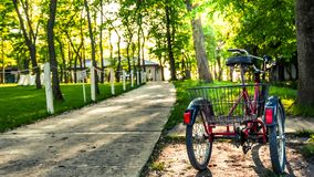 在森林边缘的三轮车  免版税库存照片
