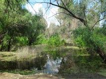 在森林边缘的沼泽 免版税库存照片