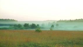 在森林边缘的雾在黎明 股票视频