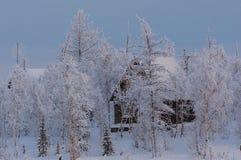 在森林边缘 免版税库存照片