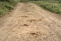在森林追踪马的蹄在含沙路的 免版税库存照片