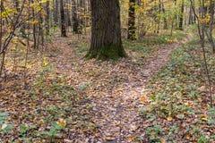 在森林道路的叉子 库存照片