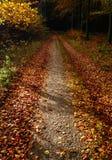 在森林道路的叶子 免版税库存图片