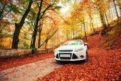 在森林道路的汽车 风景 乌克兰 欧洲 库存图片
