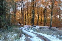 在森林道路的雪 库存照片