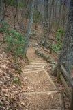 在森林道路的Wodden步 免版税库存图片