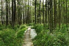 在森林里。 图库摄影