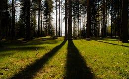 在森林里使与树和阴影的看法环境美化 免版税库存照片
