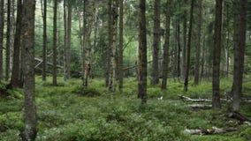 在森林里在秋天 影视素材