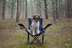 在森林里尾随坐一把椅子 库存照片