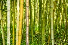在森林里归档的绿色竹子 免版税图库摄影