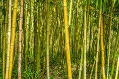 在森林里归档的绿色竹子 免版税库存图片