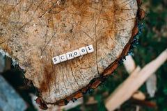 在森林里措辞字母表小珠学校树桩表面上的 免版税库存图片