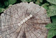 在森林里措辞字母表小珠的本质树桩表面上的 免版税库存照片