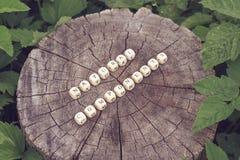 在森林里措辞小珠自然组分树桩表面上的 免版税库存图片