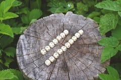 在森林里措辞小珠自然组分树桩表面上的 免版税库存照片