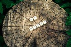 在森林里措辞是愉快的树桩表面上的字母表小珠 库存图片