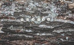 在森林里措辞木字母表小珠森林树皮表面上的 库存照片