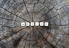 在森林里措辞木小珠的本质树桩表面上的 免版税图库摄影