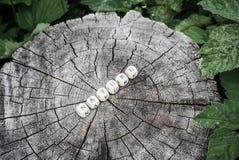 在森林里措辞木小珠的本质树桩表面上的 免版税库存照片