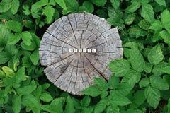 在森林里措辞木小珠的本质树桩表面上的 免版税库存图片